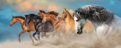 Os cavalos fecham-se acima do retrato imagem de stock