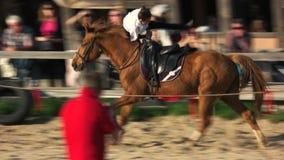 Os cavalos mostram no festival medieval filme