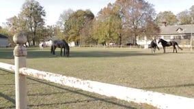 Os cavalos no pasto video estoque