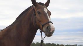 Os cavalos no prado do outono filme