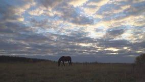 Os cavalos no prado do outono vídeos de arquivo