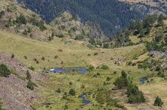 Os cavalos pastam no prado no vale da montanha em Pyrenees perto do coma Foto de Stock