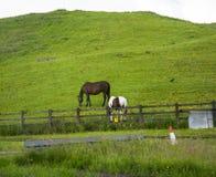 Os cavalos que incluem um pônei do animal malhado em um Lancashire colocam Imagens de Stock Royalty Free