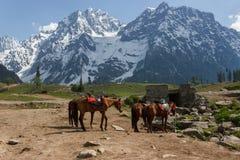 Os cavalos que pastam, gelo cobriram montanhas Imagens de Stock Royalty Free