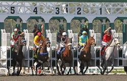 Os cavalos quebram da porta Fotografia de Stock