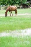 Os cavalos são grama fotografia de stock