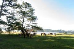 Os cavalos selvagens comem o vidro pelo lago Imagem de Stock Royalty Free