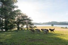 Os cavalos selvagens comem o vidro pelo lago Fotos de Stock Royalty Free