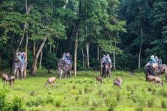 Os cervos e os turistas no elefante no Forest Park em chitwan, Nepal Foto de Stock Royalty Free