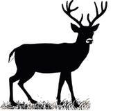 Os cervos orgulhosos nobres bonitos do sika são mamífero do ruminante no Cervidae da família Vista lateral ilustração royalty free