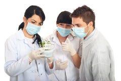 Os cientistas examinam plantas novas no solo Imagem de Stock