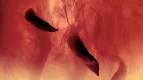 os clubes pretos nublam-se o coral vivo inteiro, fundo coral video estoque