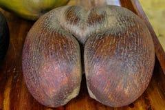 Os cocos de Mer imagens de stock