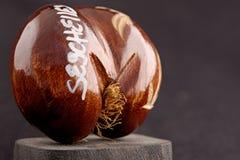 Os cocos do mar de Seychelles (coco de mer) - lembrança original de Seychelles fotografia de stock