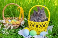 Os coelhinhos da Páscoa na cesta da Páscoa com easter coloriram ovos Fotos de Stock Royalty Free