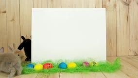 Os coelhos coloridos bonitos têm o divertimento, fundo branco para o texto, feriado da mola, símbolo de easter