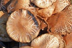 Os cogumelos Fotos de Stock Royalty Free