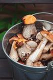 Os cogumelos alaranjados e marrons comestíveis selvagens do boleto do tampão recolheram podem dentro Fotos de Stock