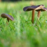 Os cogumelos fecham-se fotos de stock royalty free