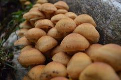 Os cogumelos fecham-se acima Foto de Stock