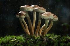 Os cogumelos na floresta são iluminados pelos raios do ` s do sol de luz Imagens de Stock Royalty Free