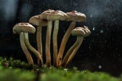 Os cogumelos na floresta são iluminados pelos raios do ` s do sol de luz Foto de Stock