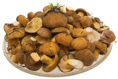 Os cogumelos no prato. Imagens de Stock