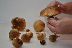 Os cogumelos são processados Foto de Stock