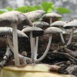 Os cogumelos selvagens colocam em Indonésia tomada com tiro macro imagens de stock