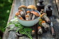 Os cogumelos selvagens comestíveis recolheram recentemente da floresta Fotos de Stock Royalty Free