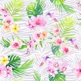 Os colibris e as flores com zebra texture o patt sem emenda do vetor Imagens de Stock Royalty Free