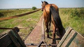 Os começos do cavalo e vão mais rapidamente video estoque