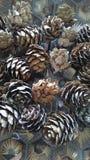 Os cones do pinho em um teste padrão geométrico de cobre surgem Fotografia de Stock Royalty Free