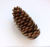 Os cones do pinho enfeitam, em um fundo claro, uma árvore da madeira Fotos de Stock Royalty Free