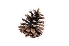 Os cones do pinho fecham-se isolado acima no fundo branco Fotos de Stock