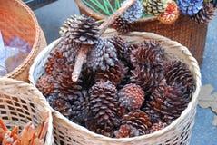 Os cones do pinho pintados na cesta em Chiangmai, Tailândia do norte Fotografia de Stock