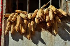 Os conjuntos sol-secos de milho penduram fora da janela fotografia de stock royalty free