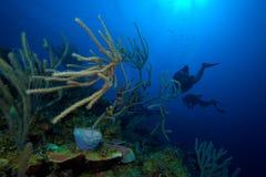Os corais macios aproximam o Largo de Cayo, Cuba Foto de Stock