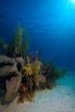 Os corais macios aproximam o Largo de Cayo, Cuba Fotos de Stock Royalty Free