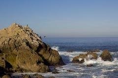 Os cormorões de Brandt em uma rocha, movimentação de 17 milhas Imagens de Stock Royalty Free