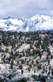 Os cormorões em rochas aproximam o canal do lebreiro e constroem uma ponte sobre ilhas, Ushuaia, Argentina do sul Fotografia de Stock