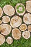 Os cotoes de árvore na grama com reciclam o símbolo Imagens de Stock Royalty Free