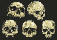 Os crânios Vector o grupo Fotografia de Stock