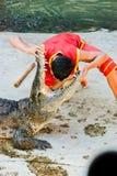 Os crocodilos abrem sua boca 2 foto de stock