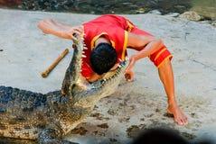 Os crocodilos abrem sua boca 3 foto de stock