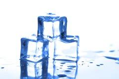 Os cubos de gelo fecham-se acima com reflexão e waterdrops em um fundo branco Filtro azul Imagens de Stock