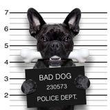 Os de chien de Mughsot Images stock