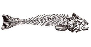 Os de poissons illustration de vecteur