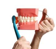 Os dentes grandes manequim e escova de dentes mostram como escovar corretamente seus dentes foto de stock