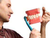 Os dentes grandes manequim e o doutor do dentista com escova de dentes mostram como escovar corretamente seus dentes fotografia de stock